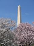 Cherry Blossoms in DC (March 2006)